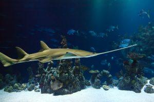 Sea Life London Aquarium